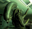 The Alien (Sevastopol)