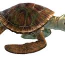 Crush The Turtle