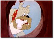 butch the bulldog butch the bulldog gallery disney wiki 1068
