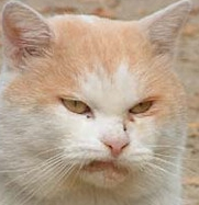 Offended_Cat_is_Offended.png