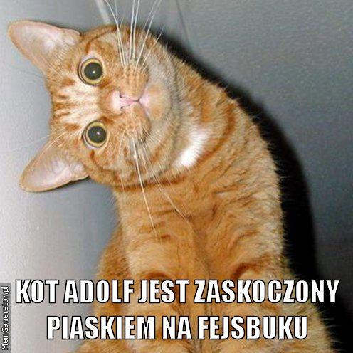 Kot-adolf-jest-zaskoczony-piaskiem-na-fejsbuku-pl-ffffff.jpg
